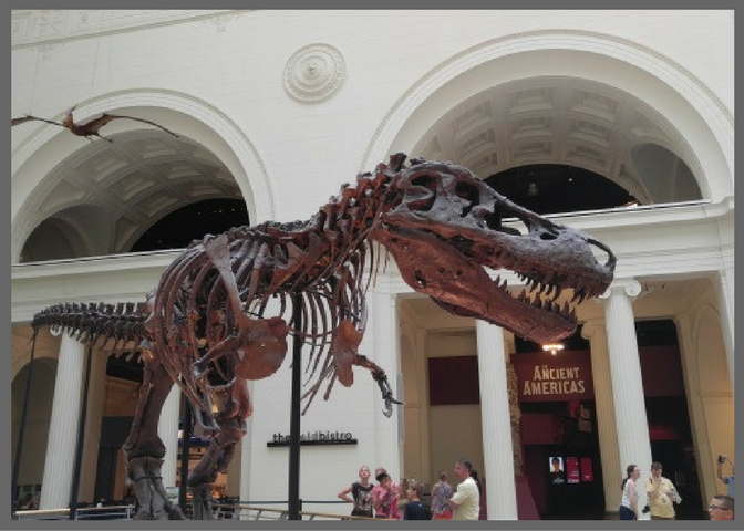 The Field Museum in Chicago - Brentwood Travel