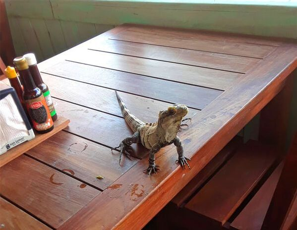 A little friend that stopped by Emily's lunch in Costa Maya!